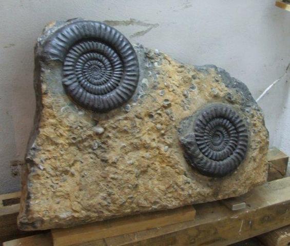 fossilien 1 - (Garten, Fossilien)