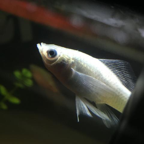 Ich glaube mein Süßwasser Fisch ist krank
