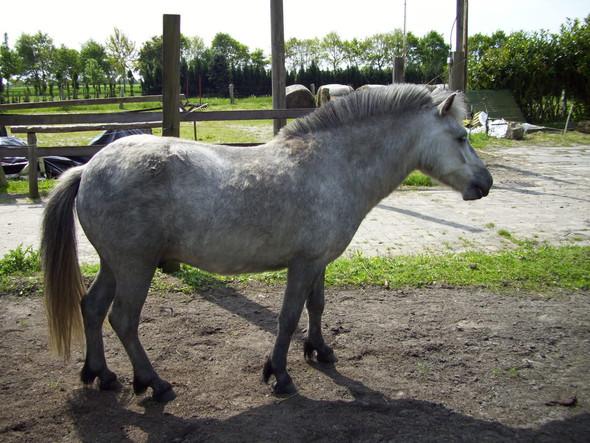 Es sieht meiner Meinung nach sehr schön aus  - (Pferde, Pony)