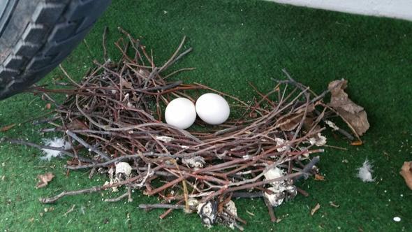 ich habe das nest auf meinem balkon was kann ich machen habe auch eine tiere haus wohnung. Black Bedroom Furniture Sets. Home Design Ideas