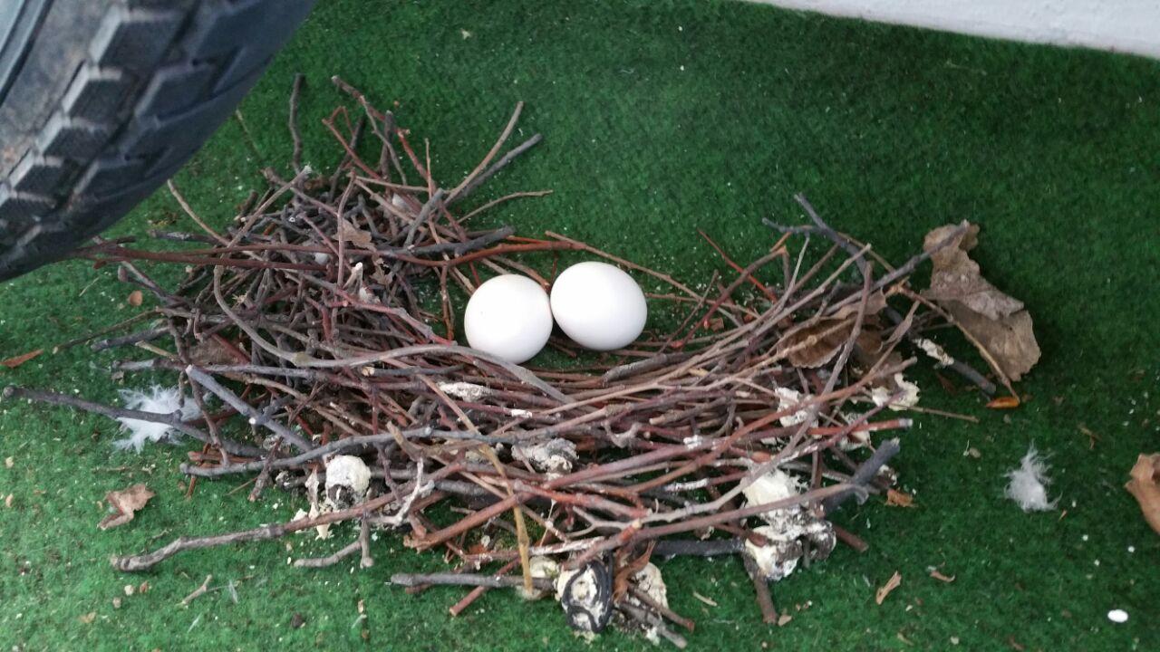 ich habe das nest auf meinem balkon was kann ich machen habe auch eine tiere wohnung haus. Black Bedroom Furniture Sets. Home Design Ideas