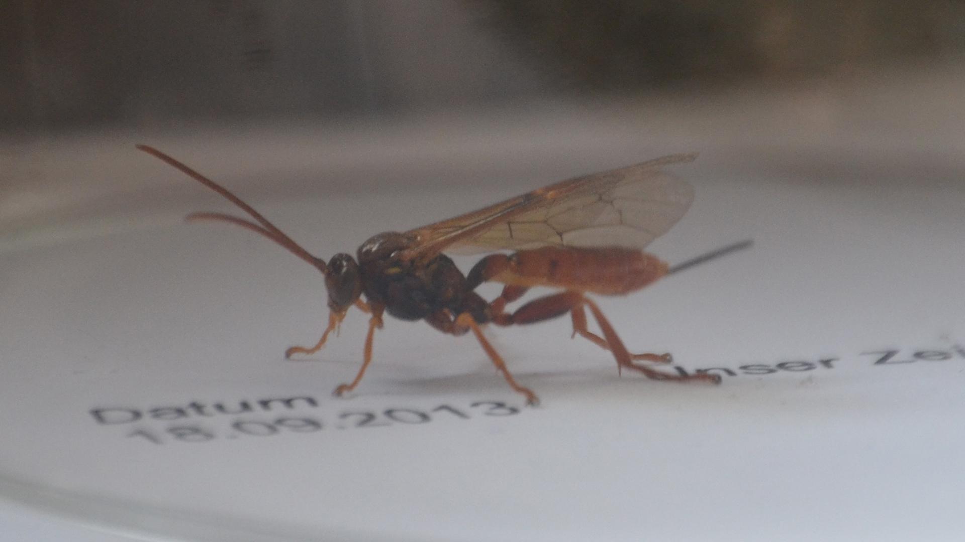 ich habe ein komisches insekt gefangen wei einer was das. Black Bedroom Furniture Sets. Home Design Ideas