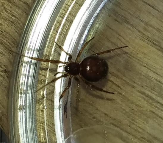 Spinnen Im Garten: Ich Habe Einen Spinner Auf Dem Balkon Gefunden. Sieht