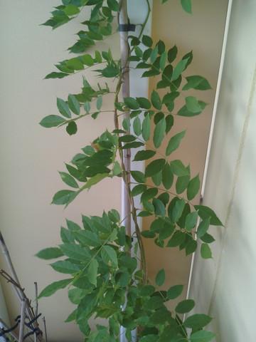 Pflanze - (Pflanzen, Kletterpflanze)
