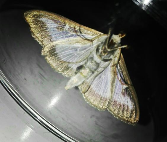 Eins - (Tiere, Insekten)