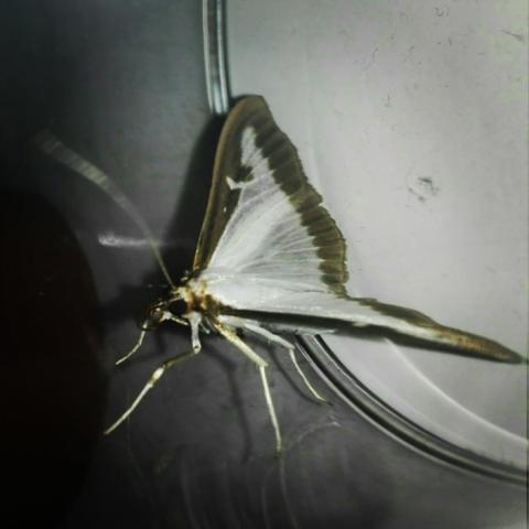Zwei - (Tiere, Insekten)