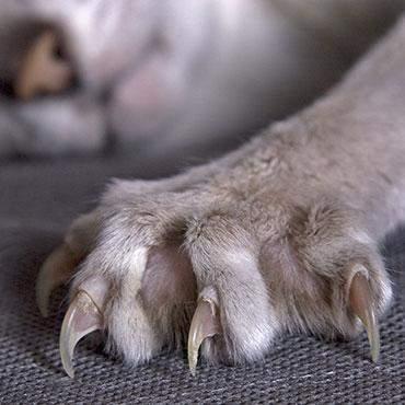 Ich kann eine Katzen Kralle formen mit meinen händen, wisst ihr was das ist und könnt ihr das auch?