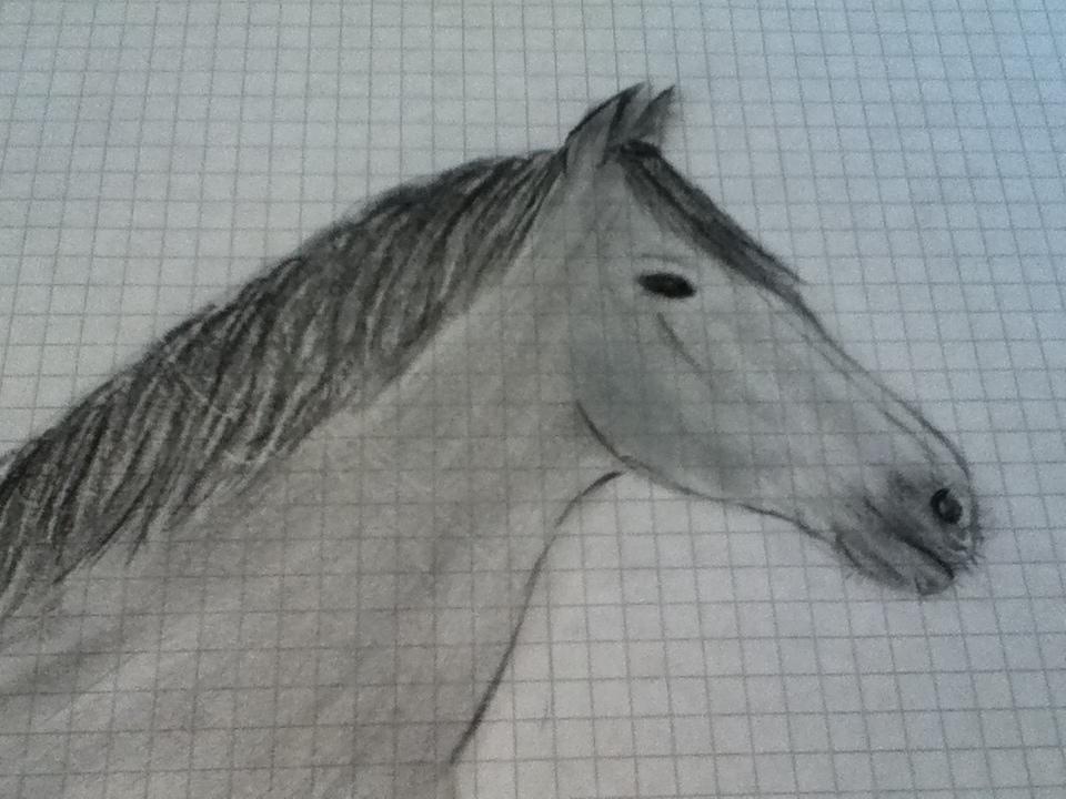 ich m chte realischtisch pferde zeichnen tipps zeichen. Black Bedroom Furniture Sets. Home Design Ideas