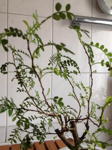 Pflanze - (Freizeit, Pflanzen, Zimmerpflanzen)