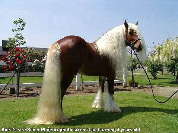 ich suche eine pferderasse pferde. Black Bedroom Furniture Sets. Home Design Ideas