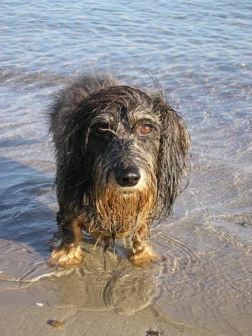 Ich Suche Einen Großen Hund : ich suche einen kinderwagen der im ablagefach viel platz ~ Jslefanu.com Haus und Dekorationen