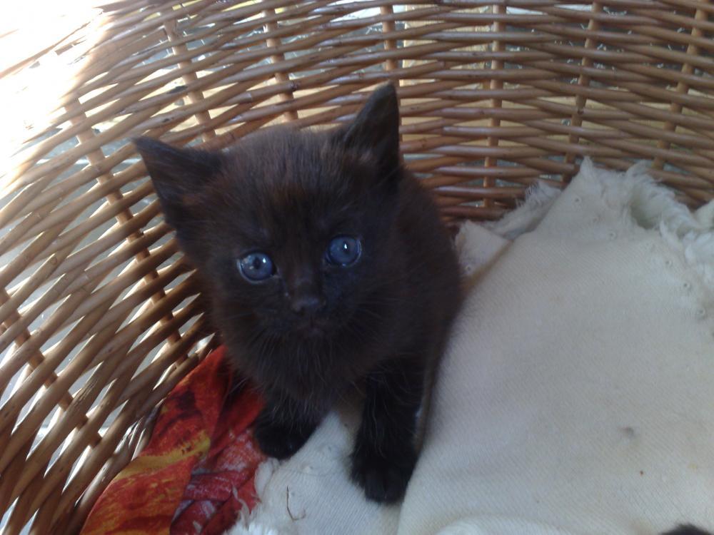 ich suche name f r einen kater katzen namen. Black Bedroom Furniture Sets. Home Design Ideas