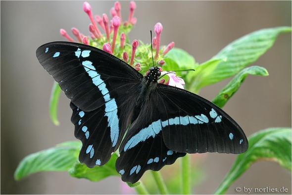 Schmetterling 1 - (Tiere, Namen, Schmetterling)