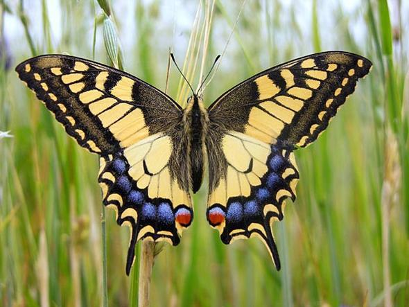 Schmetterling 2 - (Tiere, Namen, Schmetterling)