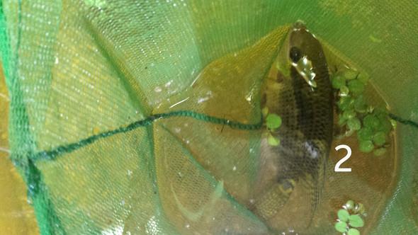 2- - (Fische, Aquarium)