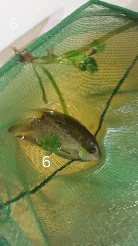 6- - (Fische, Aquarium)