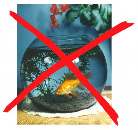 ich will einen goldfisch tiere fische goldfischglas. Black Bedroom Furniture Sets. Home Design Ideas