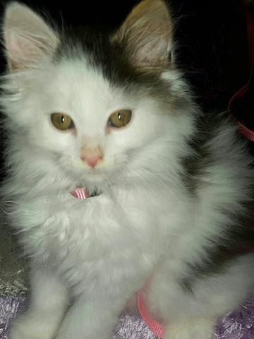 meine süße katze - (Katze, Kitten)