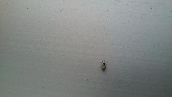 iiiiih was ist das auf meinem balkon?