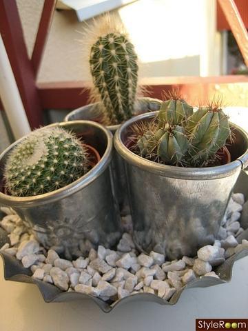 ikea kaktus h rt nicht auf zu wachsen ist das normal pflanzen pflanzenpflege kakteen. Black Bedroom Furniture Sets. Home Design Ideas
