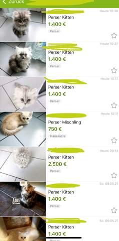 Illegal cat trading on eBay?