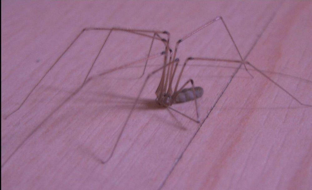 im hinterzimmer ein riesen spinnennetz spinne spinnenphobie im zimmer