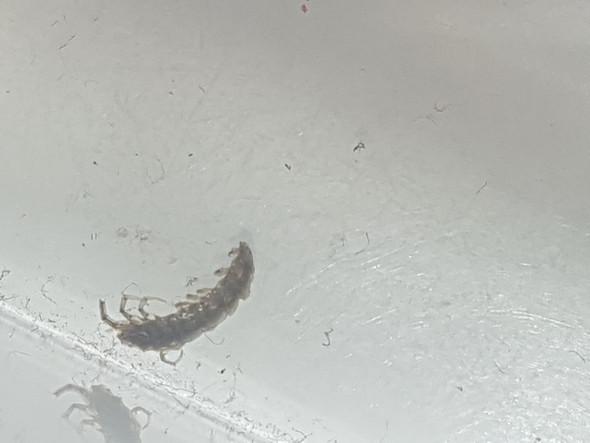 Im zimmer gefunden was ist das f r ein insekt insekten - Insekten im zimmer was tun ...