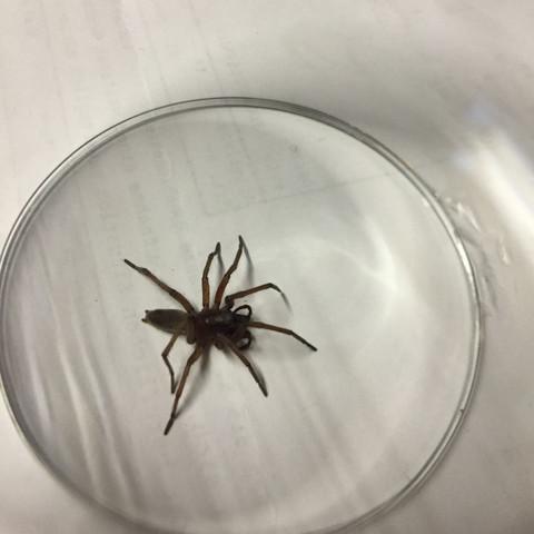Bild4 - (Spinne, Arachniden, Achtbeiner)