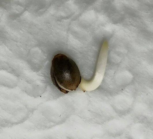 Samen - (Pflanzen, Erde, Blumen)