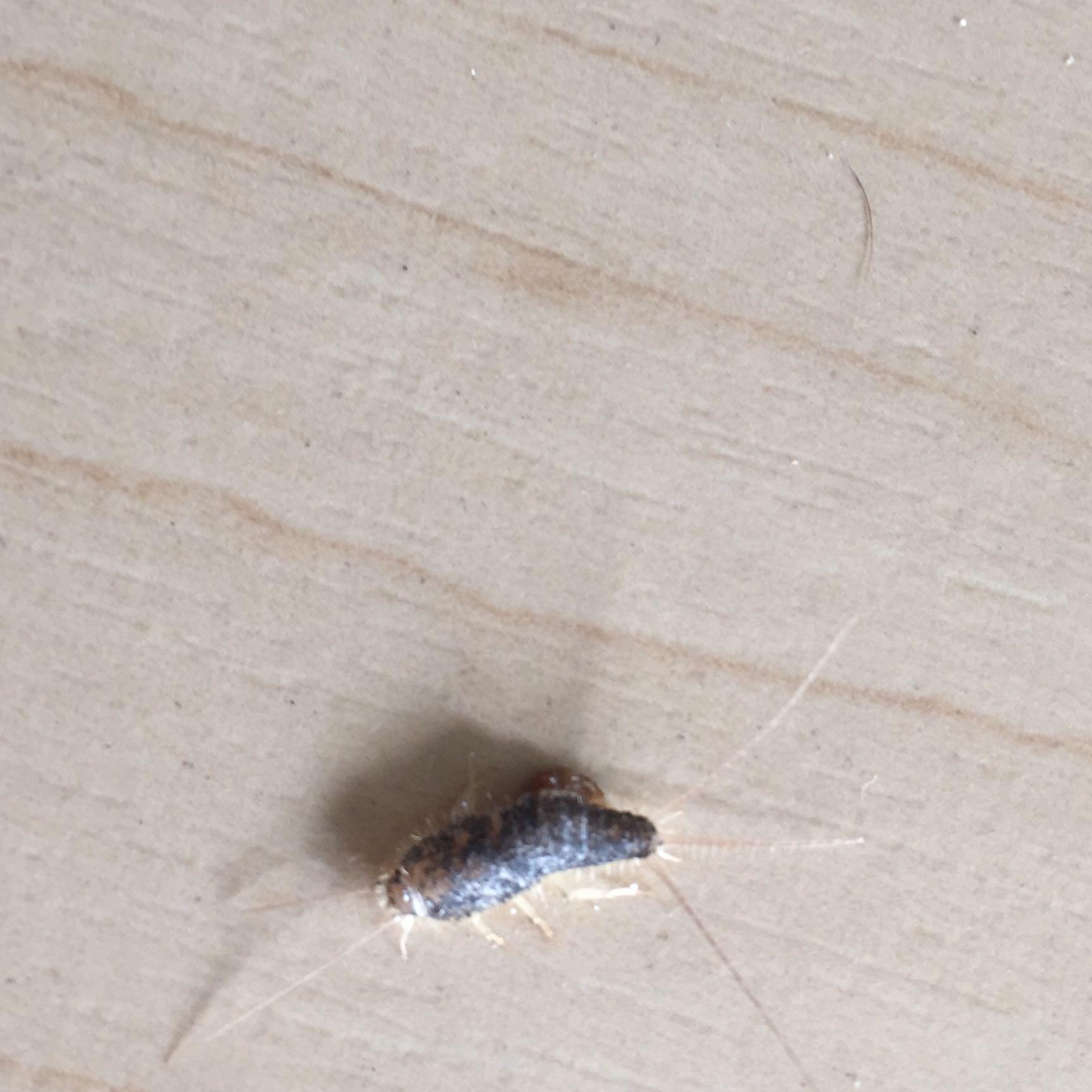 insekt auf frischer w sche was ist das f r ein tierchen auf dem bild haushalt garten insekten. Black Bedroom Furniture Sets. Home Design Ideas