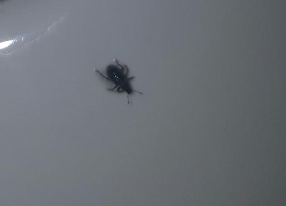 Das ist er - (Insekten, Ungeziefer)