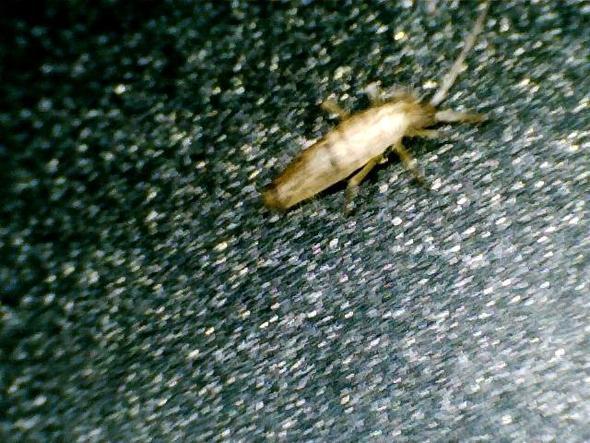 Insekt von oben - (Gesundheit, Tiere, Biologie)