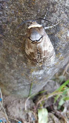Bild3 - (Garten, Insekten)