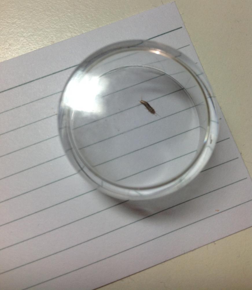 Insekt im zimmer gefunden was ist das f r eins insekten - Insekten im zimmer was tun ...