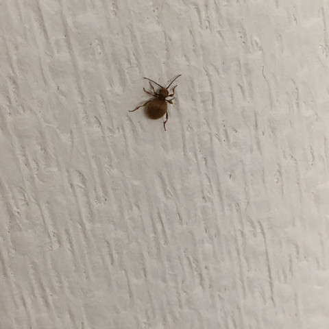 insekten im haus was ist das spinnen tierchen. Black Bedroom Furniture Sets. Home Design Ideas