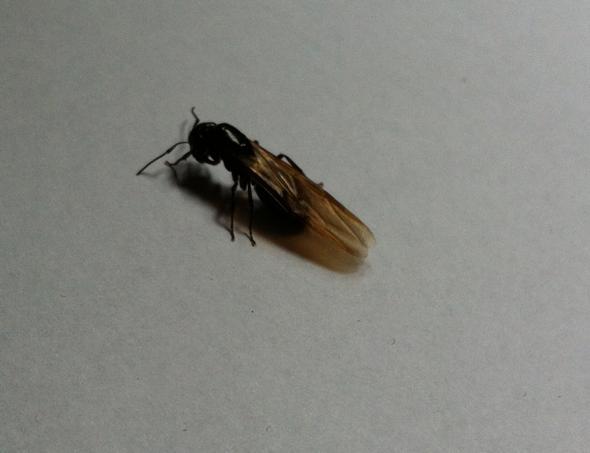 Bild 2 - (Wohnung, Insekten, Käfer)