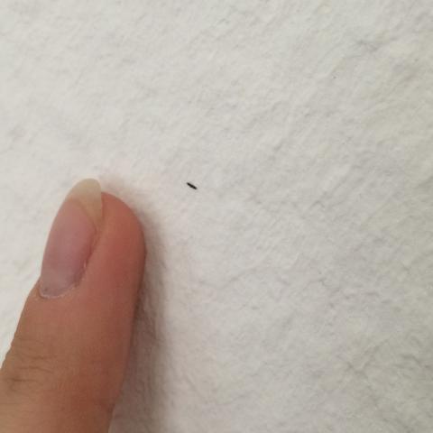 Das schwarze Etwas - (Tiere, Insekten, Plage)