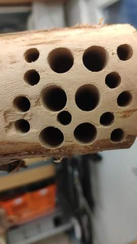 Insektenhotel Löcher in Ordnung?