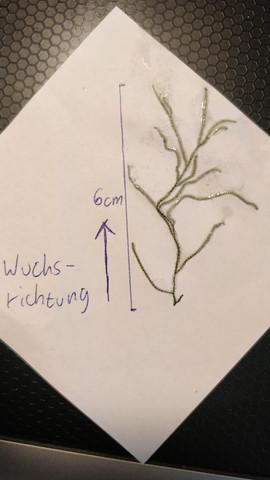 - (Pflanzen, Aquarium, Aquaristik)