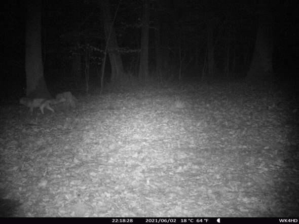 Ist auf dem Foto ein Fuchs oder  ein Wolf?
