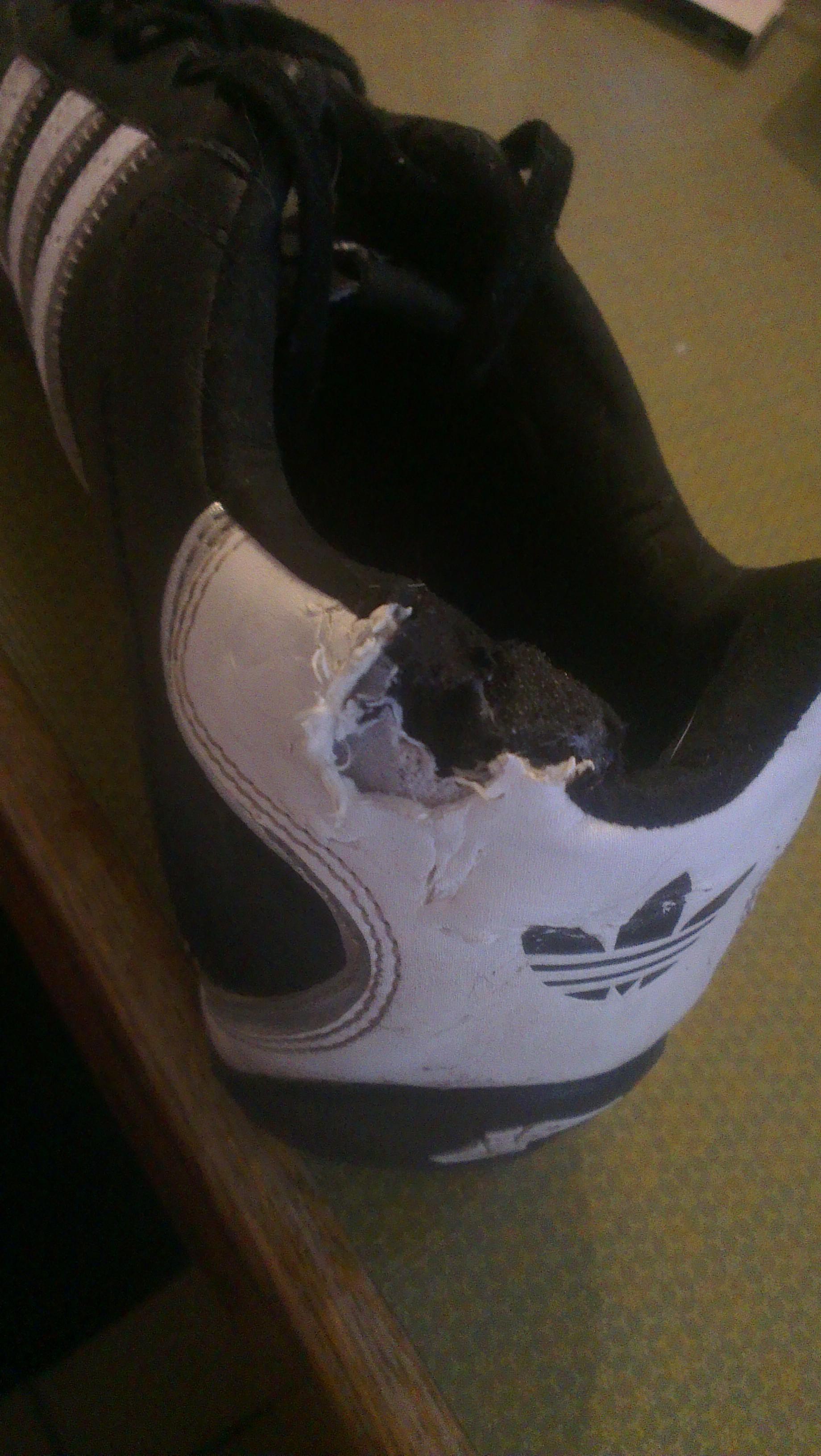 Ist bei diesem Schuh eine Reparatur möglich? Adidas Sneaker