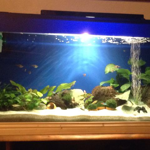 Ist das Aquarium so zu hell, und ist es für die Fische unangenehm?