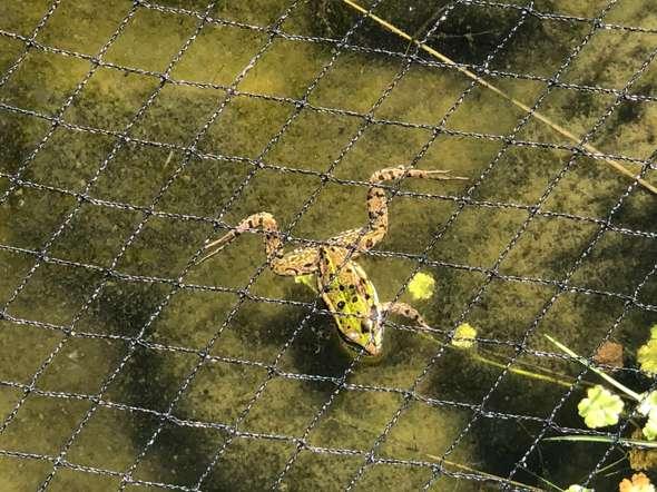 Ist das auf dem Bild ein Frosch oder eine Kröte?