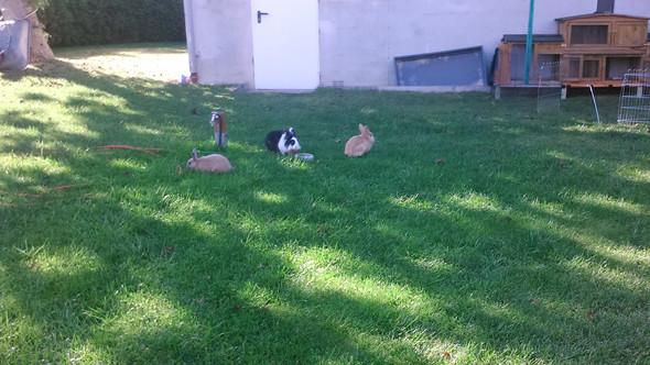 Hier sind sie im Garten - (Kaninchen, Auslauf, artgerecht)