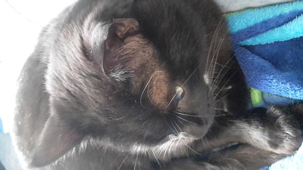 Die Kahlen Stellen von den Ohren bis zu den Augen - (Katze, Fell, Kahle Stellen)