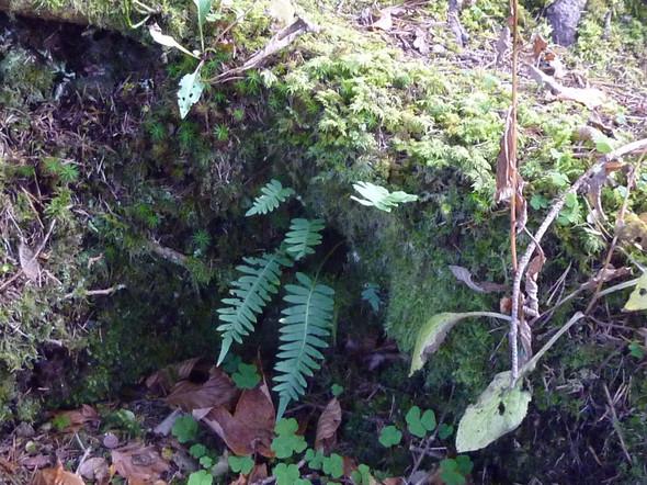 Bild 1 - (Biologie, Pflanzen, Natur)