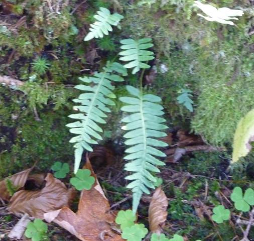Bild 2 - (Biologie, Pflanzen, Natur)
