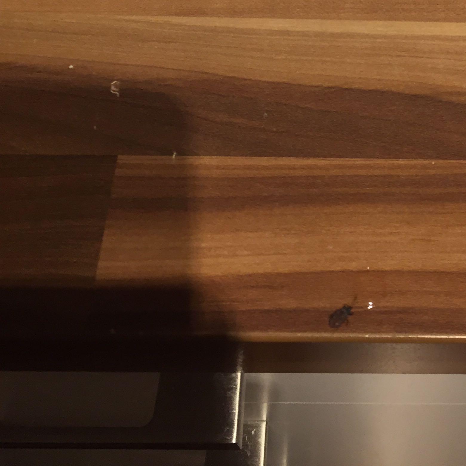 ist das ein k fer oder eine kakerlake kakerlaken. Black Bedroom Furniture Sets. Home Design Ideas