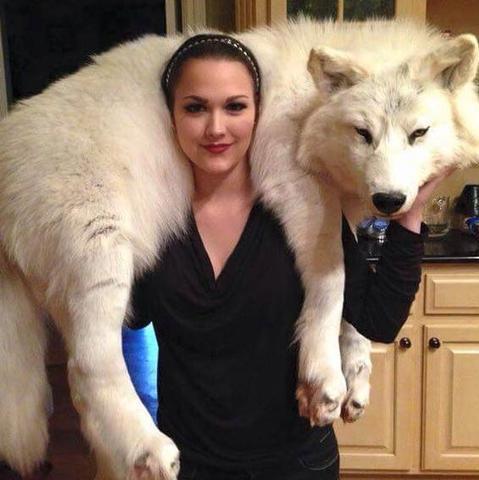 Wolf oder Hund? Lebendig oder tot? - (Hund, Wolf, Pelz)