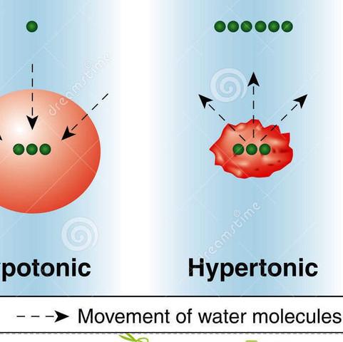 2. Skizze - (Schule, Biologie, Wasser)